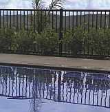 A photo of a pool with Moduline Pool Side Fencing surrounding it.
